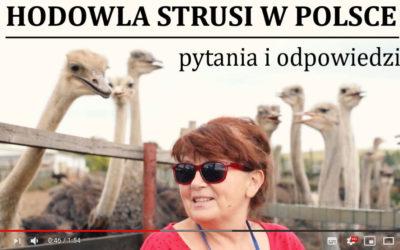 Hodowla strusi w Polsce – w pigułce – zapraszamy do obejrzenia filmu